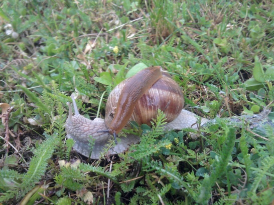 snail-and-slug