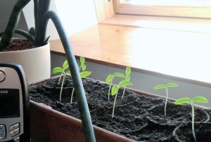 When we grow up, we'll be eggplants!