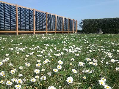 Daisies, solar collector