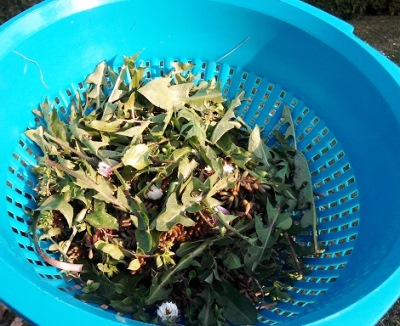 Edible wild flowers, first test in spring 2015